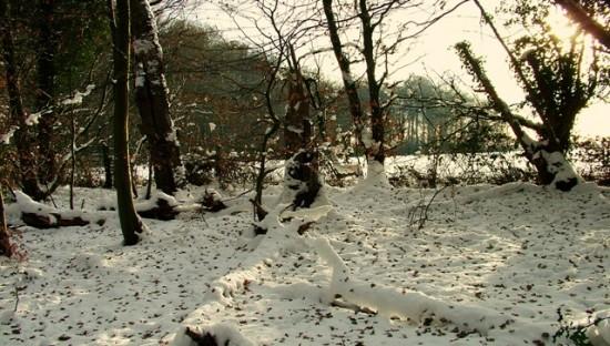 Wildwood snow-    -Stuart King- image (2)