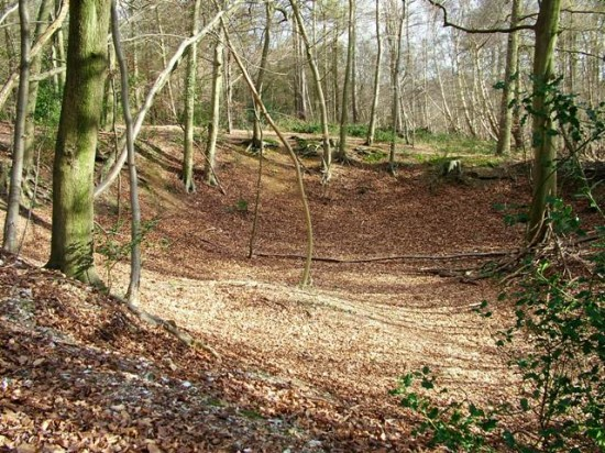 Dell - Chilterns Woodland