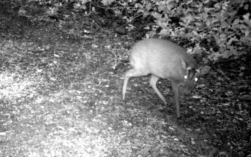 Hidden Wildwood Camera