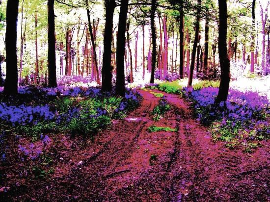Wildwood Spirit, Stuart King image, 2013,