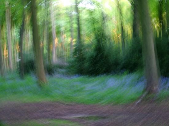 Wildwood Spirit, Stuart King image, 2013,   (12)