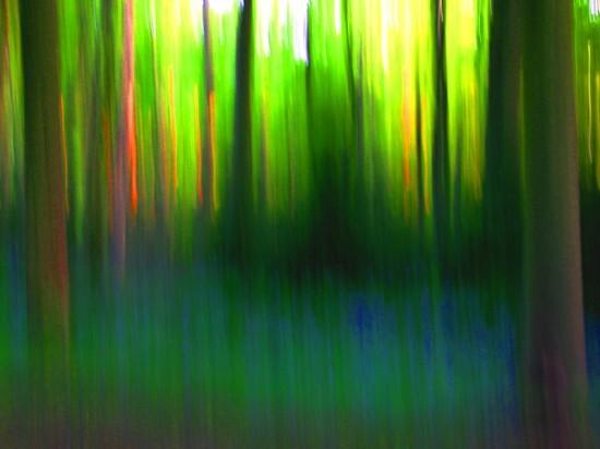 Wildwood Spirit, Stuart King image, 2013,   (13)
