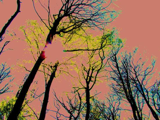 Wildwood Spirit, Stuart King image, 2013,   (2)