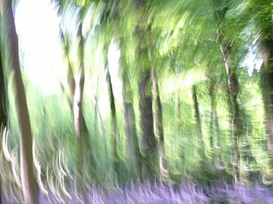 Wildwood Spirit, Stuart King image, 2013,   (4)