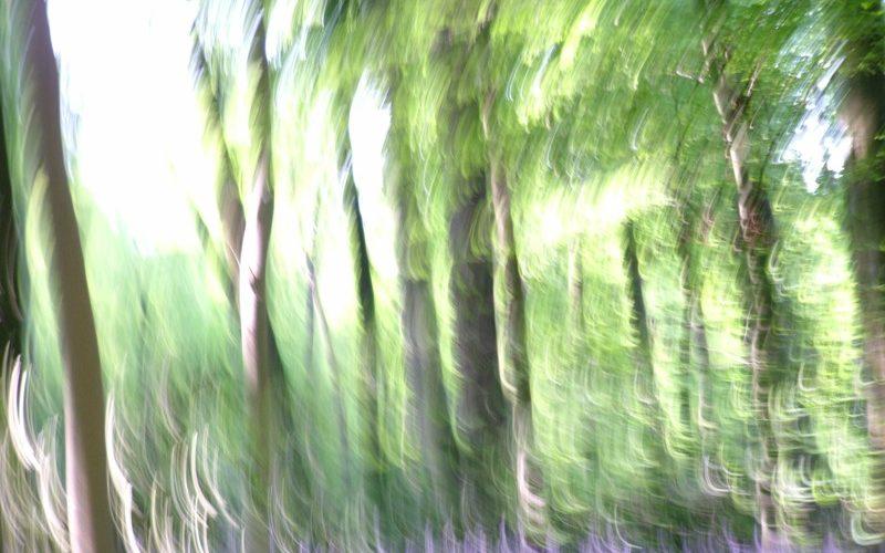 Spirit of the Wildwood