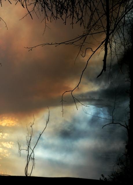 Wildwood Spirit, Stuart King image, 2013,   (7)